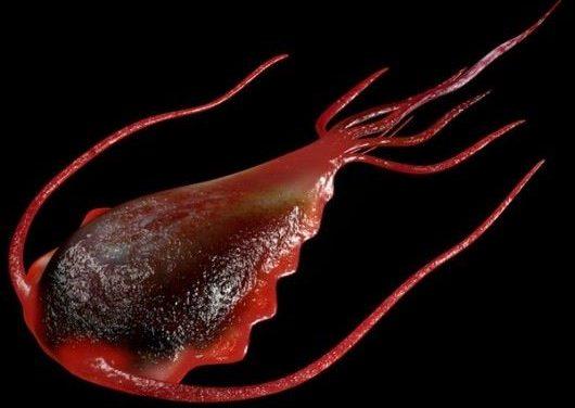 La giardiasi e il parassita che la provoca